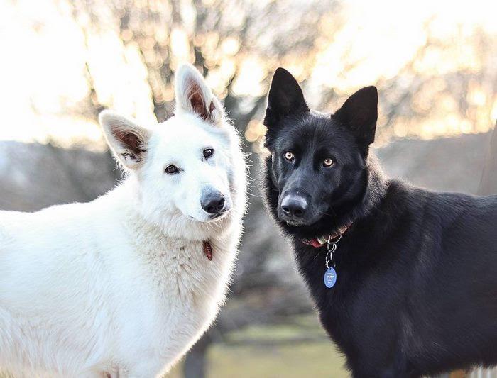 dog-wedding-photograpy-kaya-smiley-9