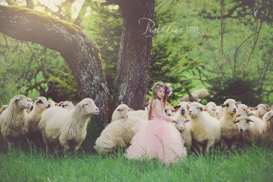 sesja pieniny owce