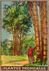 pl tropic 12