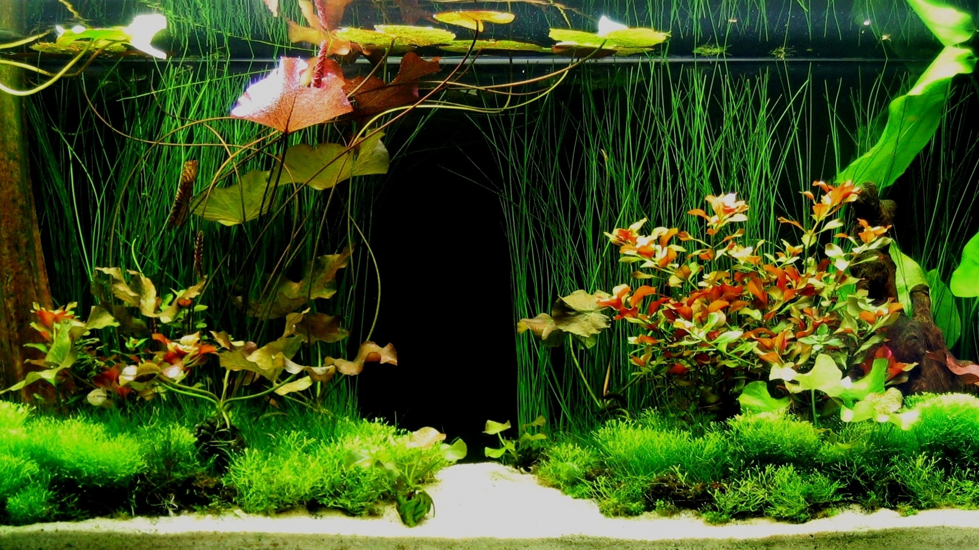 Aquarium background4