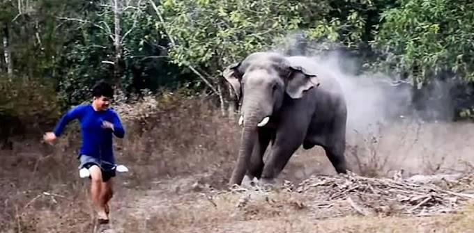 Terrifying moment hungry elephant charges at wildlife officers
