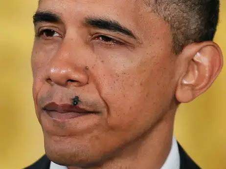 Resultado de imagen para mosca obama