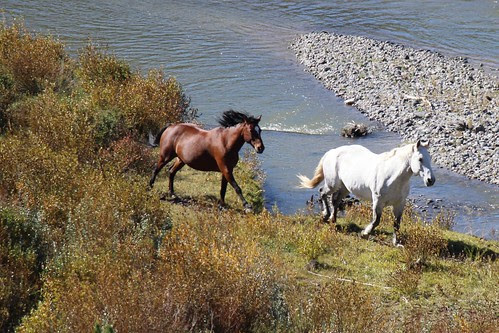 IMG_1900a_Horses_at_Tie_Hack_Memorial_Between_Dubois_and_Tetons