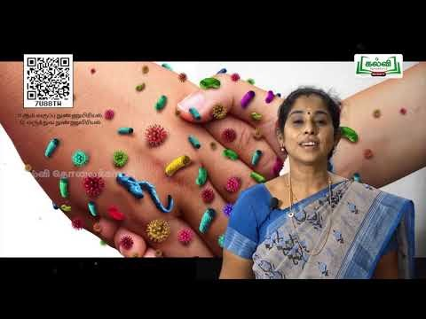 11th Micro Biology மருத்துவ நுண்ணுயிரியல் அலகு 3 பகுதி 2 Kalvi TV