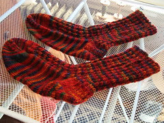 Sugar Maple socks