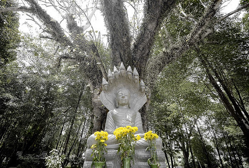 Buddha at Tha Reua temple