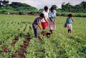 agricultura-familiar-1[1]