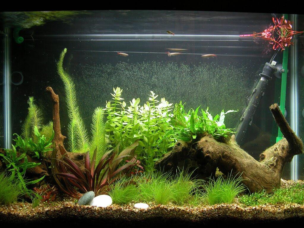 Luxury Unique Fish Tank Decorations