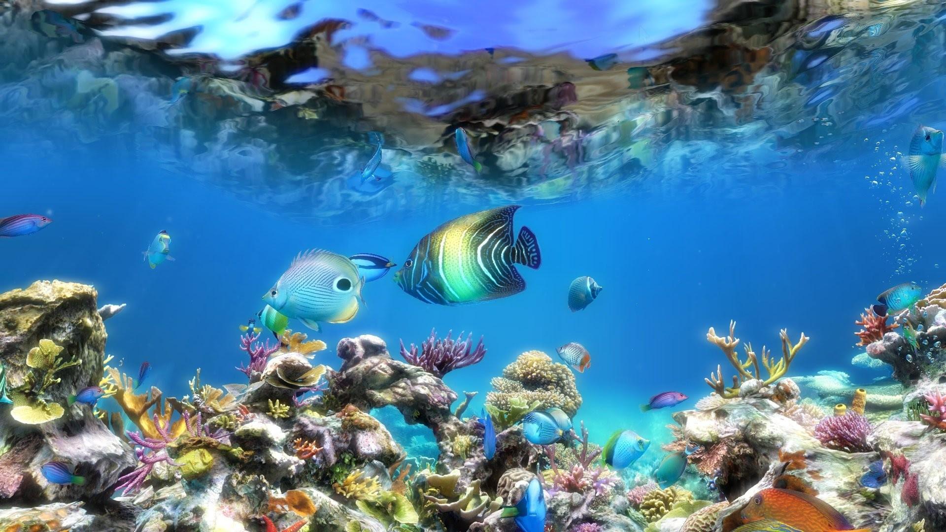 Moving Aquarium Wallpaper (49+ images)