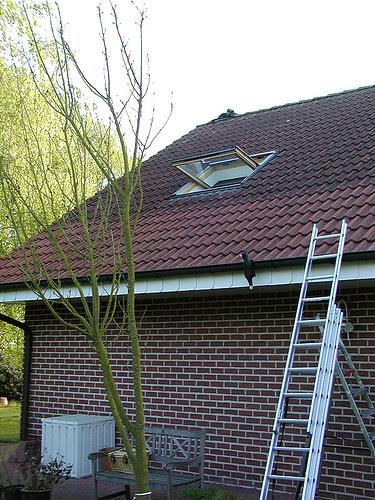 met de ladder proberen langs het dak omhoog te komen