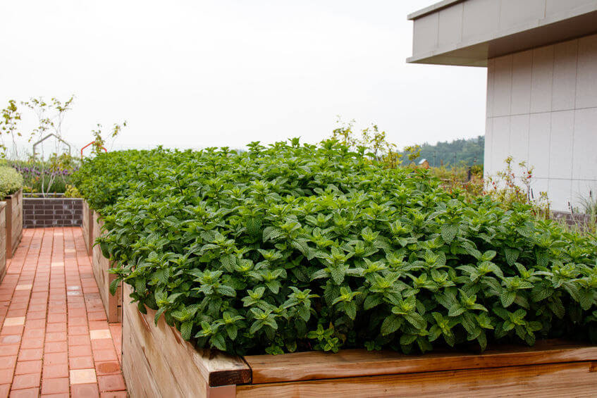 How You Should Start A Terrace Garden In Bangalore