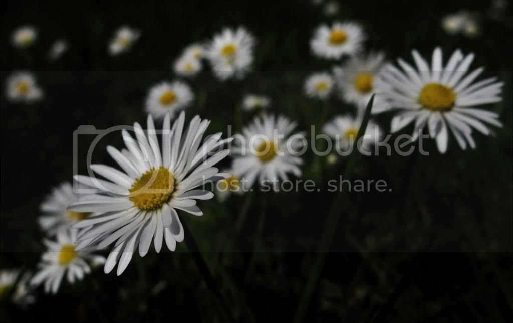 photo mad5_zpsf546e367.jpg