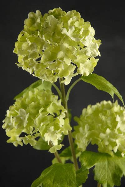 """32"""" Green Viburnum Branch with 3 Flowers"""