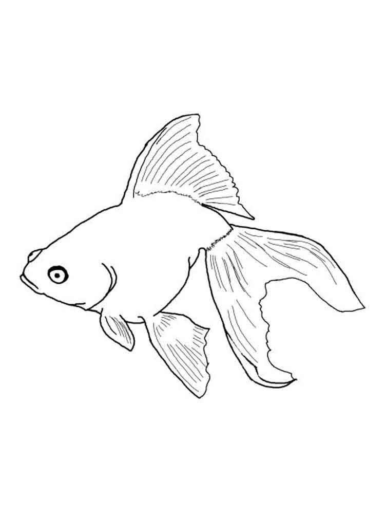 Goldfish coloring pages. Download and print Goldfish ...