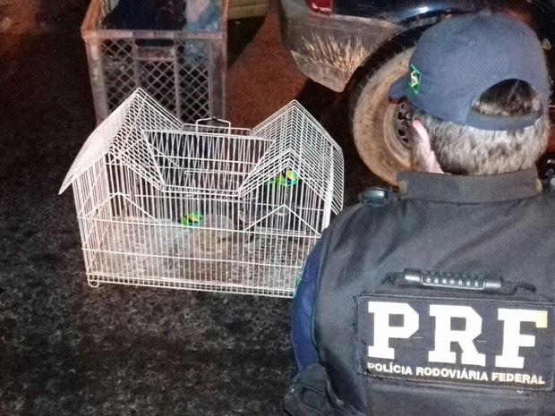 PRF apreendeu pássaros dentro de carro de dono de sítio em Miracatu (Foto: G1)