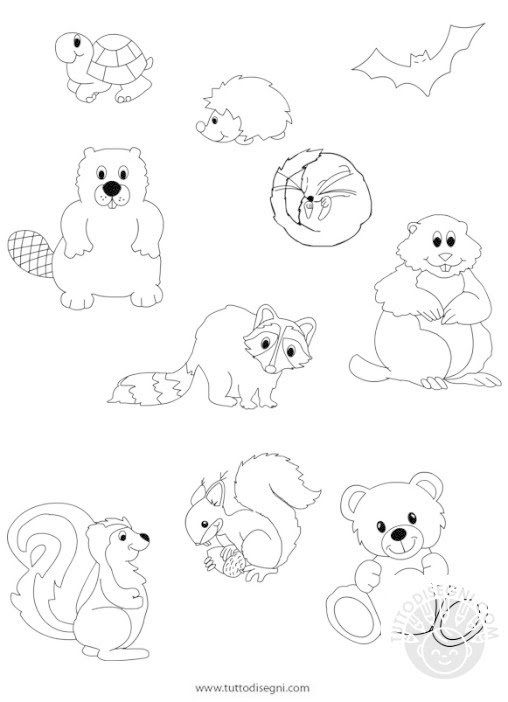 Disegni Animali In Letargo Da Colorare Coloratutto Website