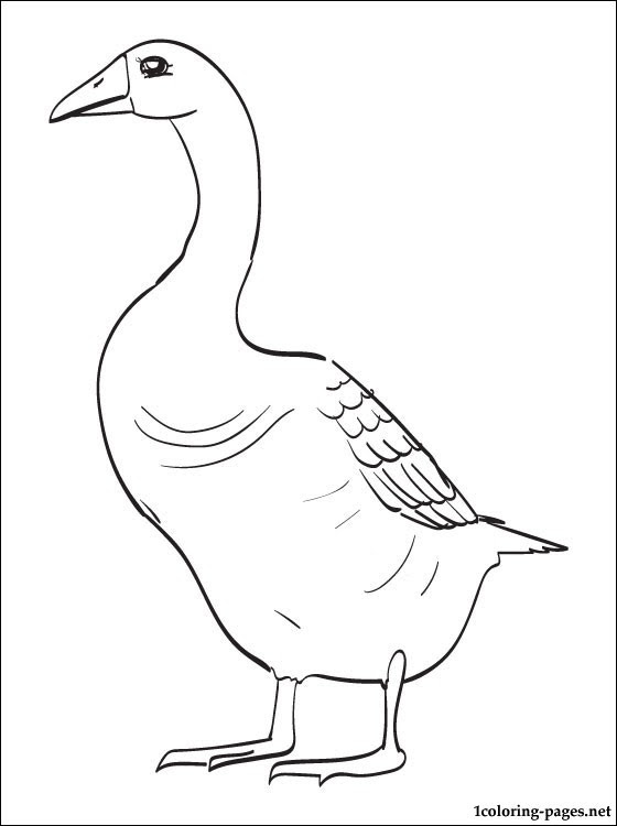 Goose printable coloring page | Coloring pages
