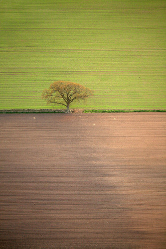 Tree From The Air por Dr Max