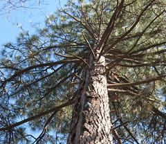 squirrel tree3