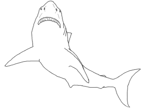 Leopard Shark Page Coloring Pages