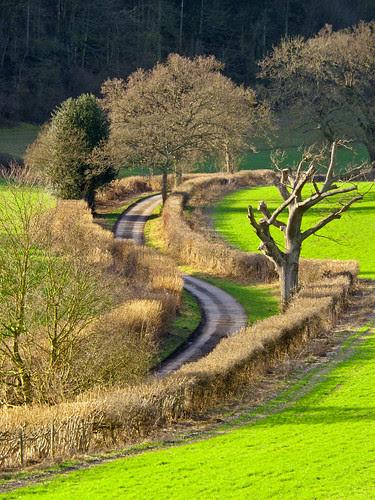 Winding Country Lane by TonyKRO