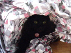 Huggy Bear hiding in the packing paper