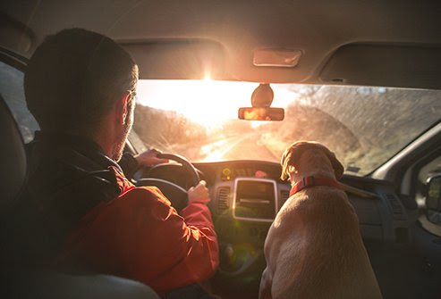 If your allergies become chronic and severe, you may have no other choice than to say goodbye to your pet.