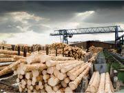 Україні доведеться відмовитися від експорту лісу