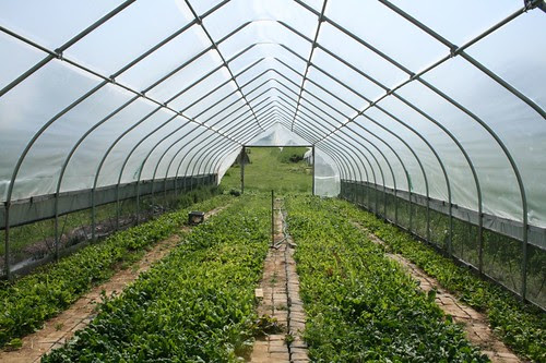Clagett Farm Day 2008