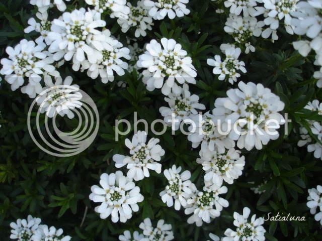 photo aa7171c6-fd9e-4ab8-9ac6-891a57e8d39b.jpg