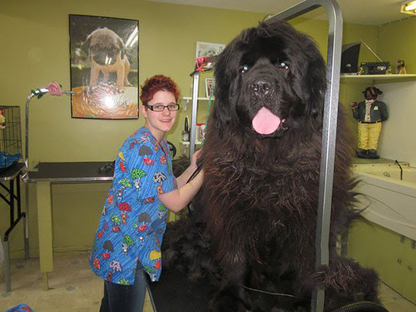 25. This is not a bear!  Not a mammoth!  This is a dog!  the size of the dog