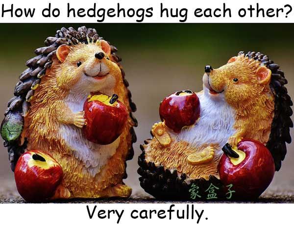 hedgehog kiss