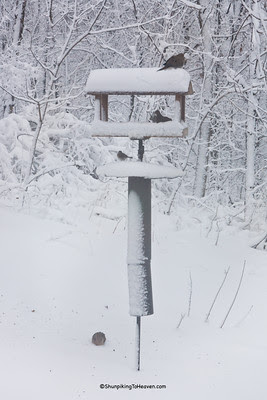 Mourning Doves at Bird Feeder in Winter, Dane County, Wisconsin