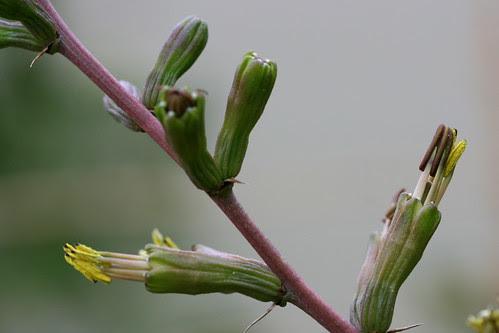 discreet agave flowers