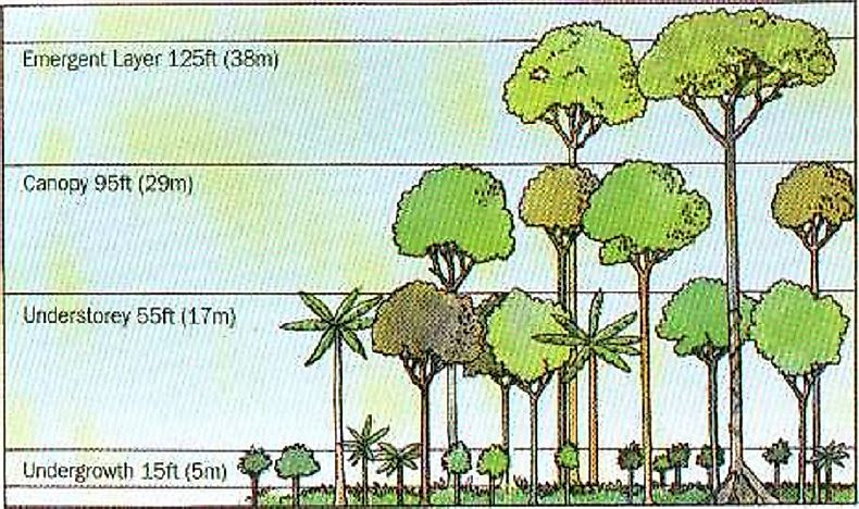 forest stratification