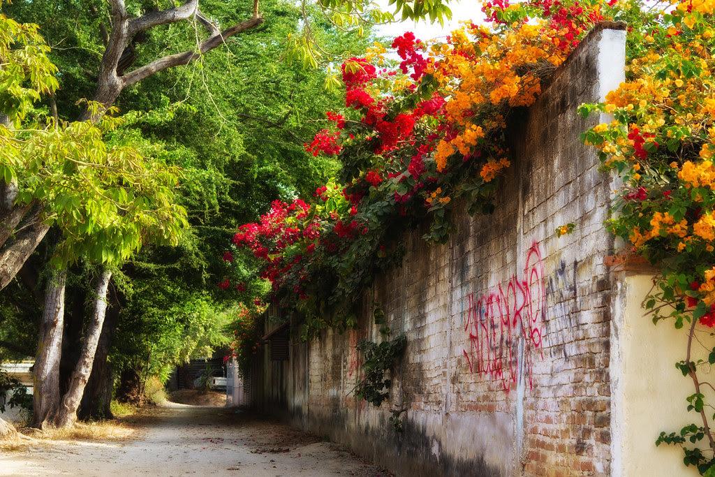 Riviera Nayarit Alley