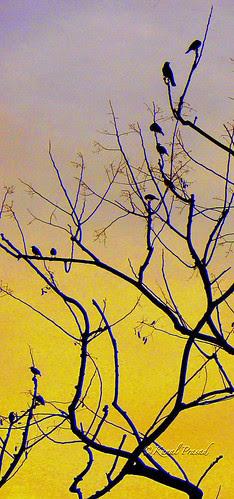11 Birds