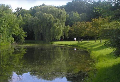 Thorpe Park Willow
