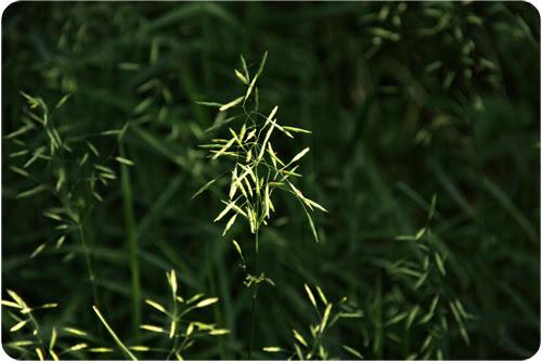 Grass web.jpg