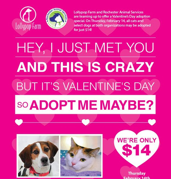 ljcfyi: $14 Pet Adoptions for Valentine's Day!
