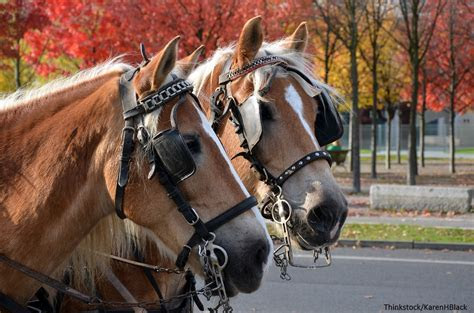 3 of the Best Savannah Carriage Tours to Try Soon