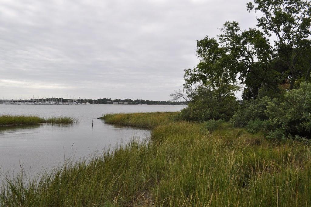 Marsh on the Lafayette 1