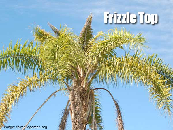 frizzle-top-epsom-salt