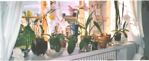 orkideatkesalla