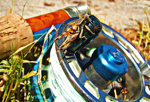 grasshopper-SIG