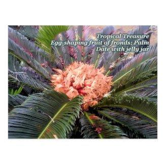Tropical Treasure Palm Tree