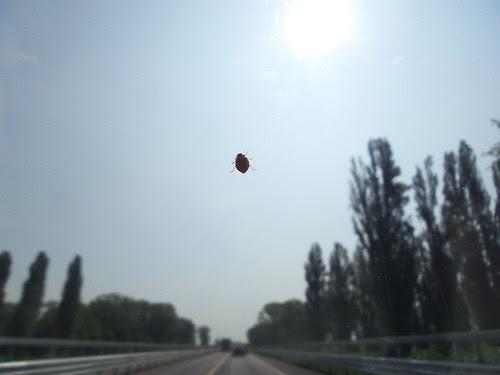 In viaggio con una cucinella! by Ylbert Durishti