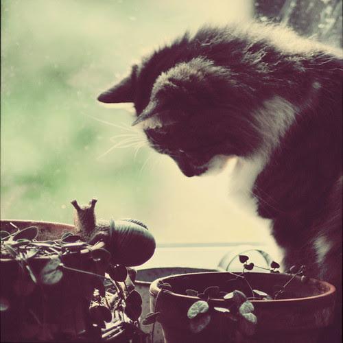 Le chat et l'escargot... por Au fil de...