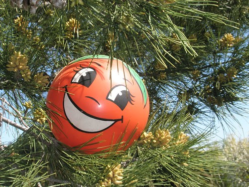 miss orange in the pine tree