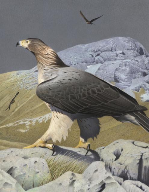 Mudanças climáticas: estudo sugere que uma em cada seis espécies está ameaçada de extinção